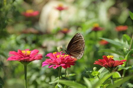 Butterfly garden on Hoa Lan island