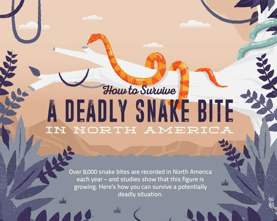 How To Survive A Deadly Snake Bite