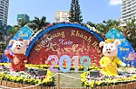 Decorative pig statues for Lunar New Year 2019 in Nha Trang