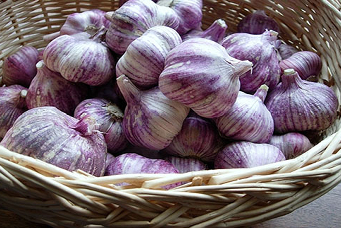 Van Hung Commune has bumper crop of garlic