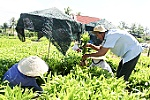 Khanh Hoa speeding up afforestation