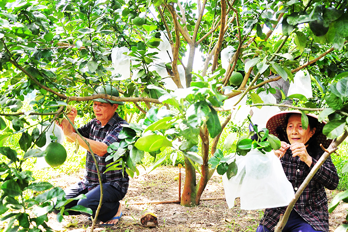Khanh Vinh District focuses on developing key crops