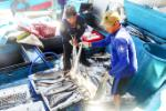 Khanh Hoa fishermen catch over 82,100 tons of seafood