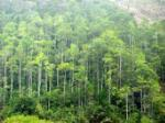 Planting more than 71 hectares of forest