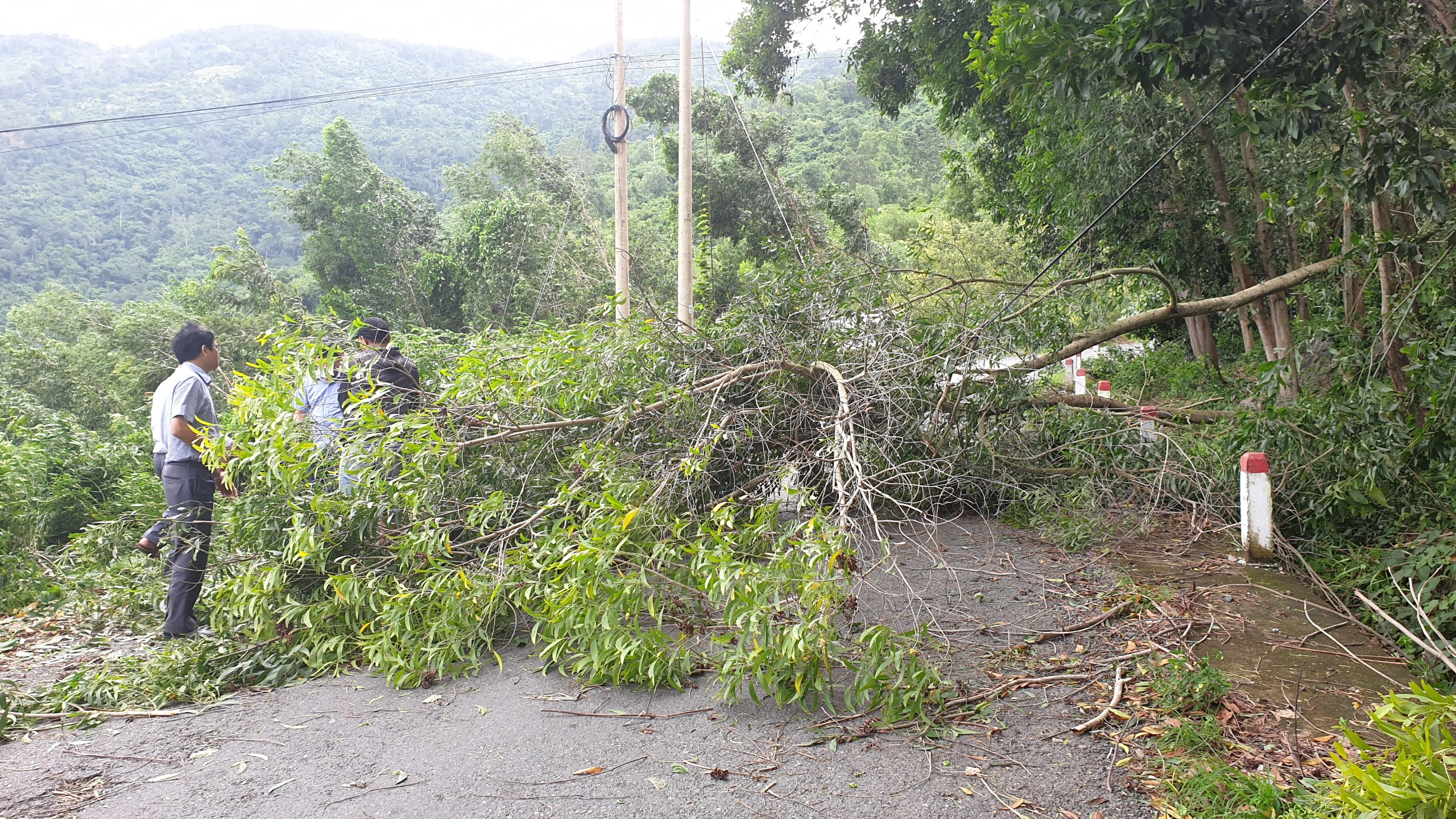 Many fallen trees cause traffic disruption on Provincial Road 9