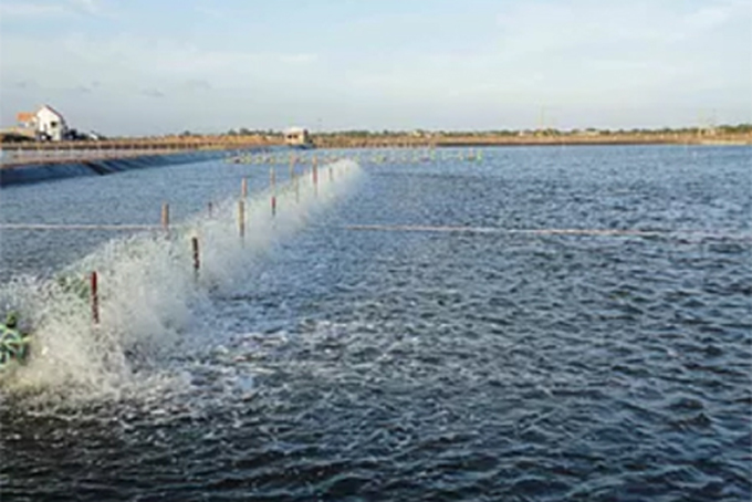 Production of aquacultured seafood reaches over 16,447 tons