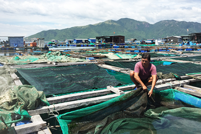 Khanh Hoa targets 18,400 tons of farmed seafood production