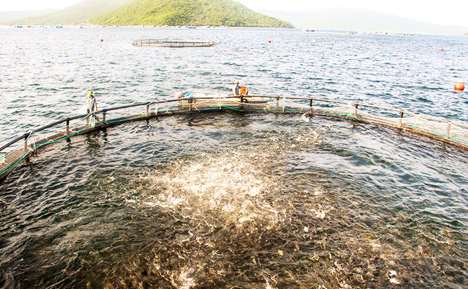 Cooperation to develop seaculture sustainably
