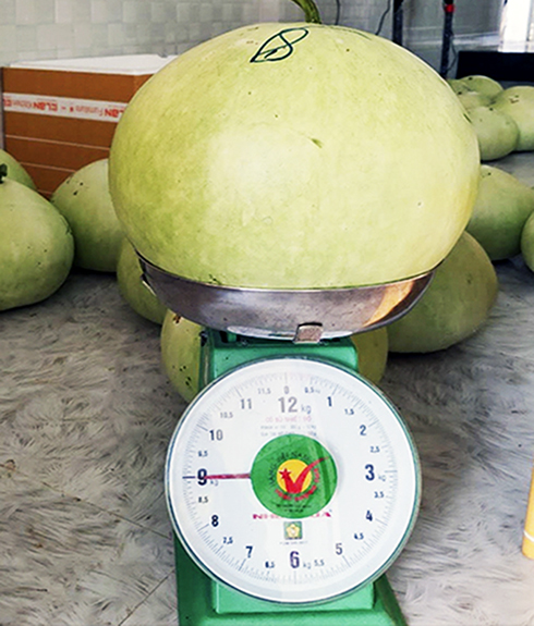 A Japanese gourd weighs 9 kilograms.